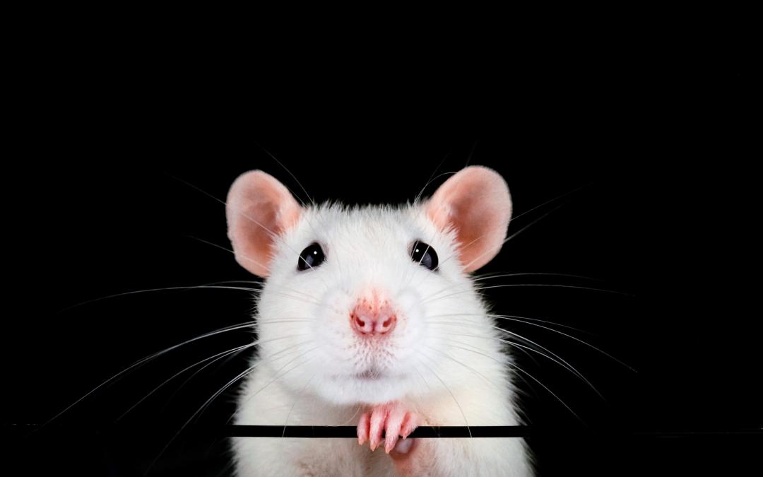 Co nám přináší rok kovové Myši?