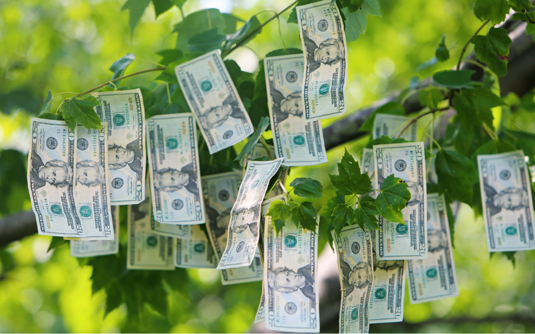 Pomozte svým penězům růst